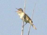 伊庭内湖の鳥さん