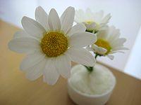 食卓のお花