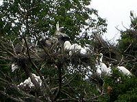 鳥が咲く木